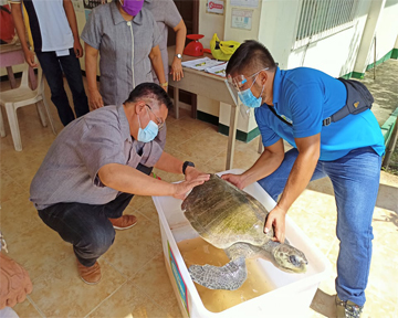 Sea turtle with multiple injuries - Rescued but didn't make it