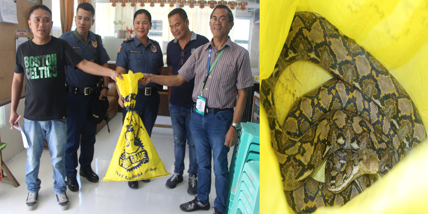 Python found in Miagao, turned over